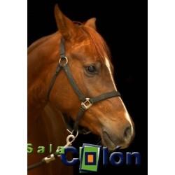 Lámina caballo