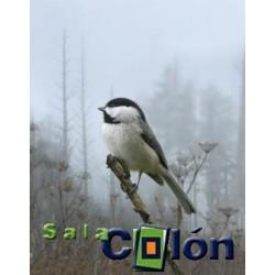 Lámina pájaro