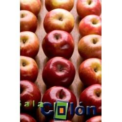 Lámina manzanas