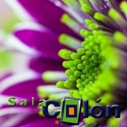 Lámina Flor morada y verde