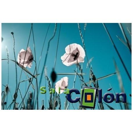 Lámina flores blancas sobre cielo azul