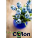 Lámina florero azul y verde