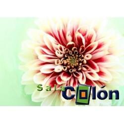 Lámina flor blanca y roja