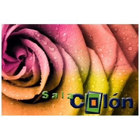 Flor tonos rosas