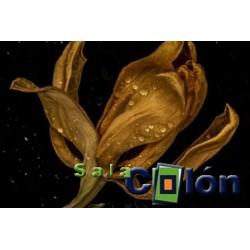 Lámina flor marrón mojada