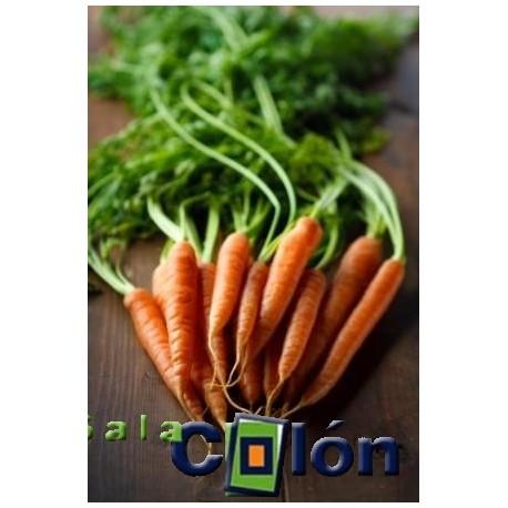 Lámina zanahorias
