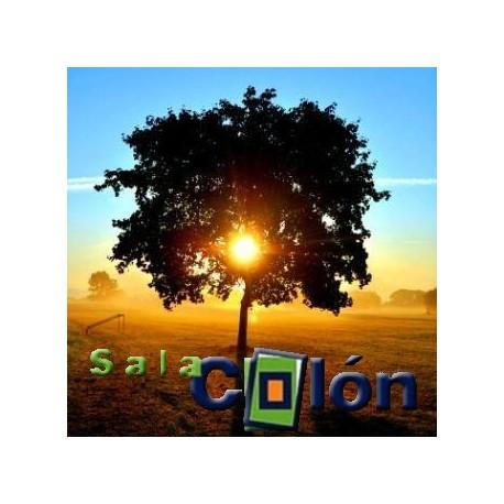 Lámina árbol puesta de sol